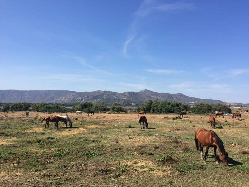Horse trail in Olbia