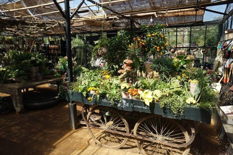 Greenhouse at Petersham Nurseries