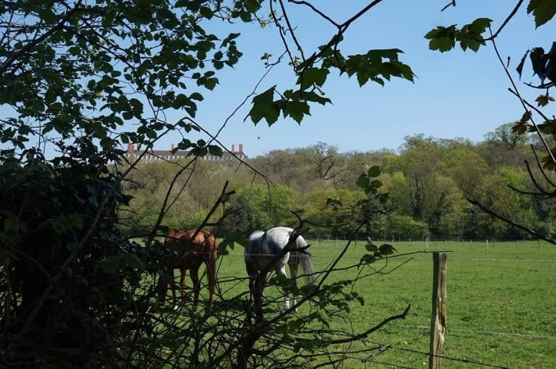 Horses in a field in Richmond