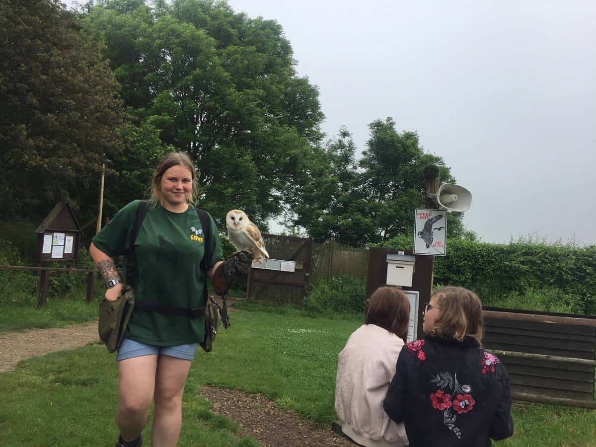 Birds of prey at Eagle Heights