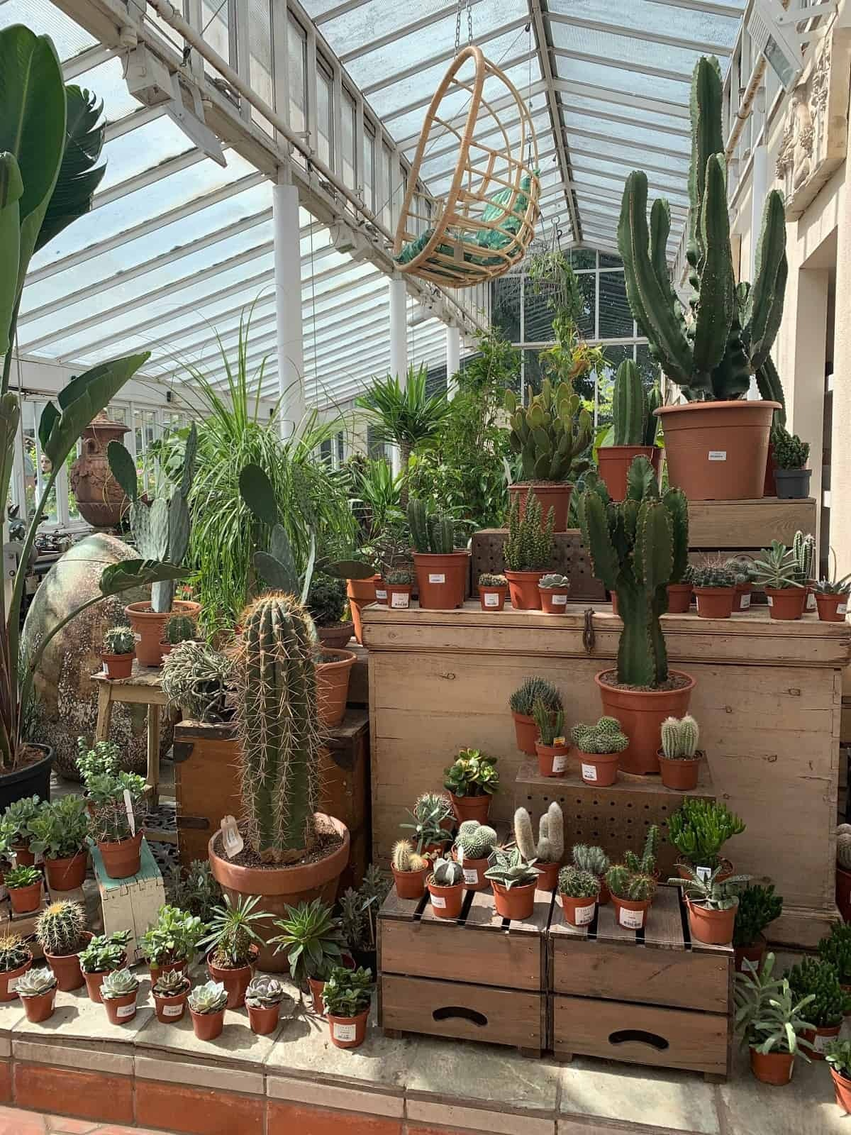 Cacti and succulents at Clifton Nursery