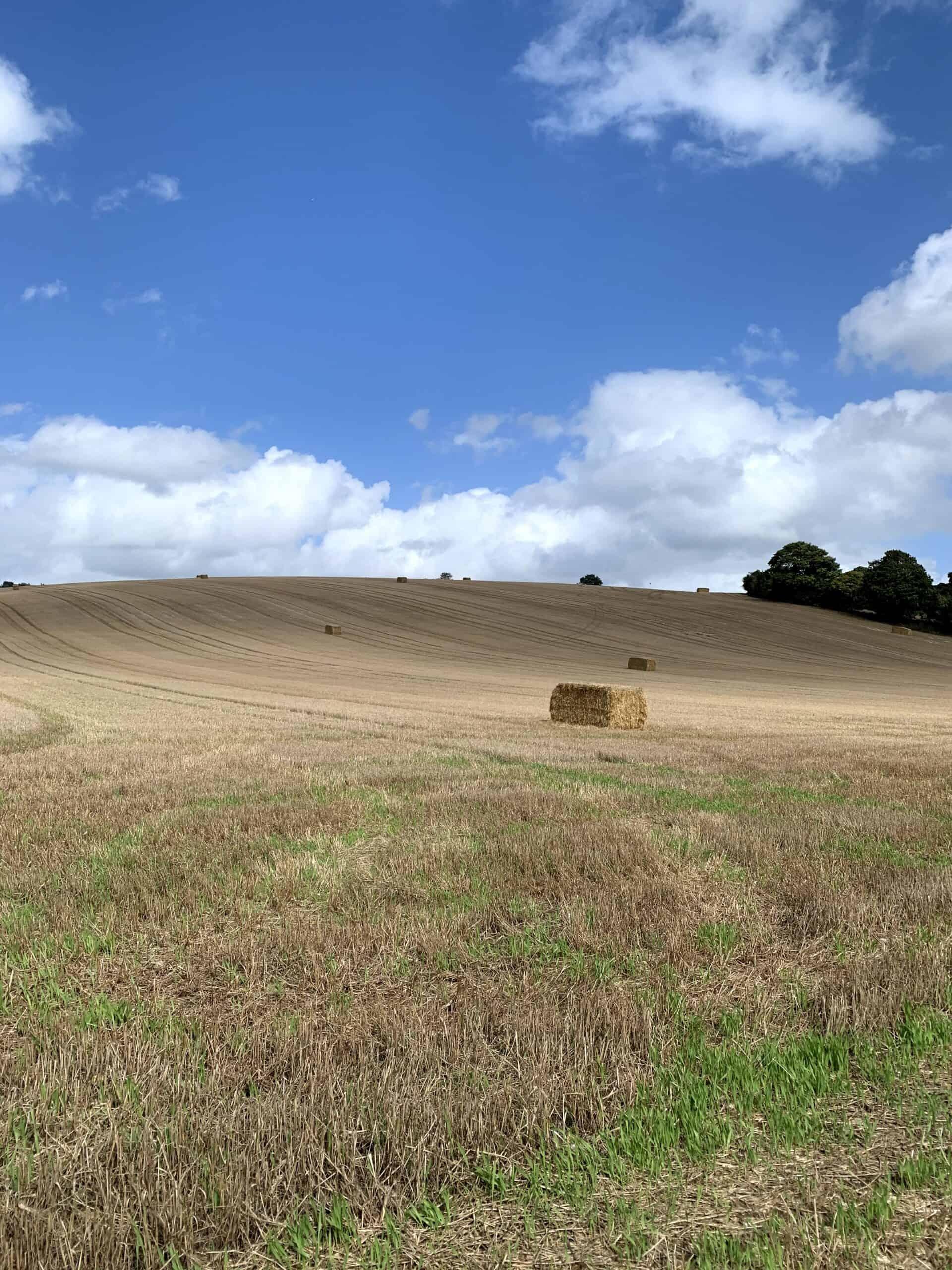 Hay bale in a field