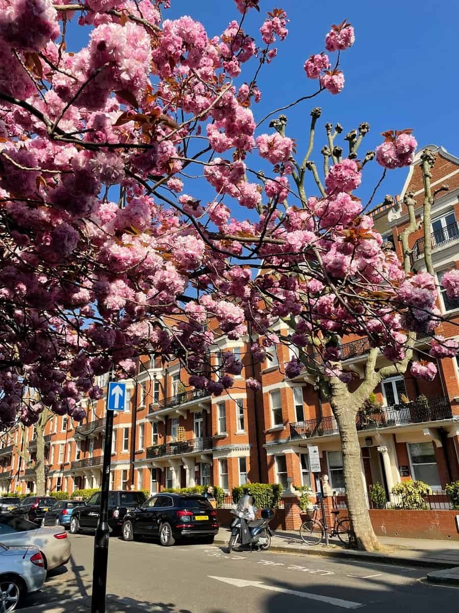 Blossom season in London
